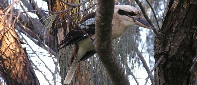 Kookaburra | Fraser Island Retreat | Happy Valley
