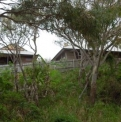 Cabins from Road  | Fraser Island Retreat | Happy Valley
