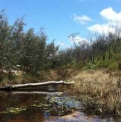 Creek with water lilies  | Fraser Island Retreat | Happy Valley