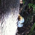 Fungi on tree  | Fraser Island Retreat | Happy Valley