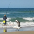 Pelican and Fishing | Fraser Island Retreat | Happy Valley