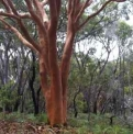 Beautiful Coloured Trees | Fraser Island Retreat | Happy Valley