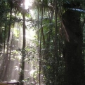 Sun through rainforest | Fraser Island Retreat | Happy Valley